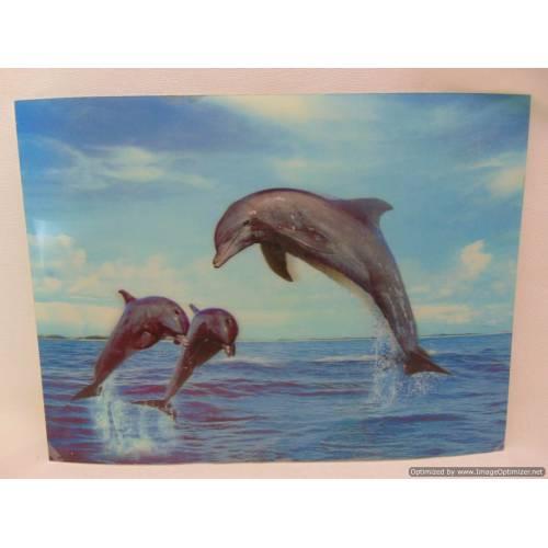 Paliktnis Delfīni